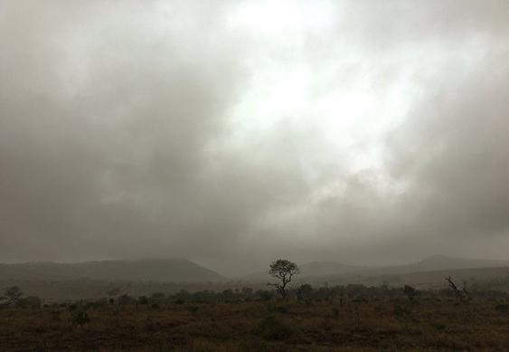 Safari Landscape, South Africa